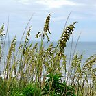 Dune Grass, Nags Head by WonderlandGlass