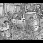 Barrels by Judith Livingston