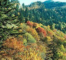New England Fall Foliage by BravuraMedia
