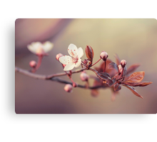 spring in the air Canvas Print