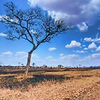 Tree in the Serengeti by Michael Stiso