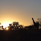 the early photographer gets the Giraffe by neon-gobi