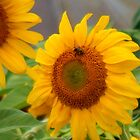 Sunflower by WildThingPhotos