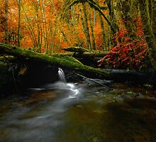 The Big Glow  ~ Whittaker Creek ~ by Charles & Patricia   Harkins ~ Picture Oregon