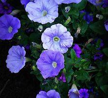Blue Glory - Cheery Blue Blossoms by Miriam Danar