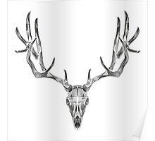 Deer Skull Animal Line Art Poster