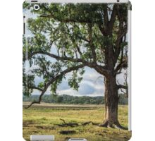 Lone Tree in the Morning iPad Case/Skin