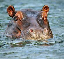 Blue Water Hippo by Jennifer Sumpton