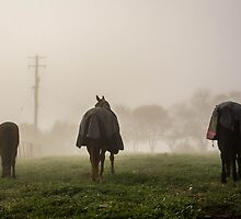 Horses in the Mist by Candice84
