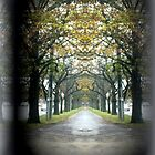 Tree lined Guard of Honour by Chris Chalk