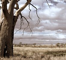 Just Down The Road From The Black Stump by Ben Loveday