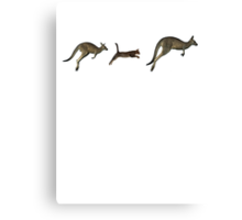 Three kangaroos? Canvas Print