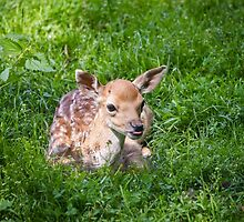 Adorable Fawn by PatiDesigns