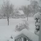 OMG! Out my front window! by BarbBarcikKeith