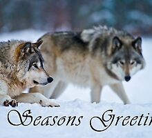 Timber Wolf Seasons Card - 17 by WolvesOnly