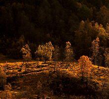 Birch forest in autumn by GryThunes