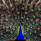Plumage by Ron Hannah