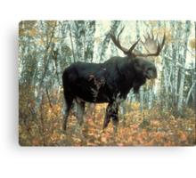 Huge Moose  Canvas Print
