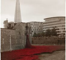 Poppies at the Tower by Veterisflamme