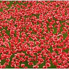 Poppies by Veterisflamme