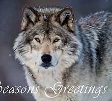Timber Wolf Seasons Card - 20 by WolvesOnly