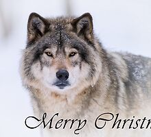 Timber Wolf Christmas Card - English - 21 by WolvesOnly