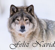 Timber Wolf Christmas Card - Spanish - 21 by WolvesOnly