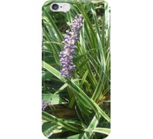 blooming variegated grass with purple flower iPhone Case/Skin