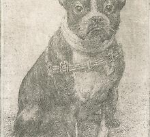 Henry the Boston terrier  by v0ff