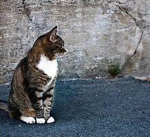 Nonchalant Kitty by nanuen