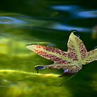 Autumn leaf afloat by Celeste Mookherjee
