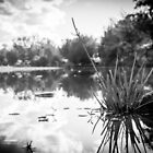 River Reflections in B&W by Candice84