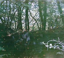 Sea of Trees by Jenn Winterbine