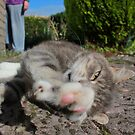 Tabby cat lying on garden path by turniptowers