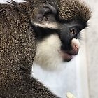 Lesser Spot-nosed Monkey by Yampimon