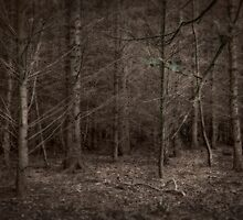 Dusk Forest View by maratshdey