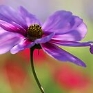 Cosmos - Beautiful Lady in Lavender by T.J. Martin