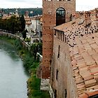 Verona_ Roof by dyanera