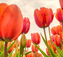 Dutch Tulips Sticker