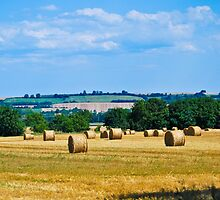 Hay Rolls by Sue Martin