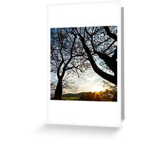 FLAME-TREES-0451 Greeting Card