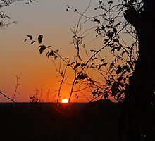 Sunset in the Kruger National Park by Hermien Pellissier