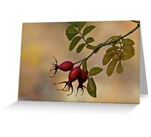 Nootka Rose Hips Greeting Card