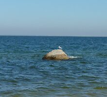 Seagull Perched on a Rock by rowerdani13