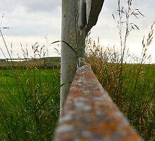Follow The Fence Line by dmacneil