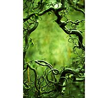Curly tree branches  Photographic Print