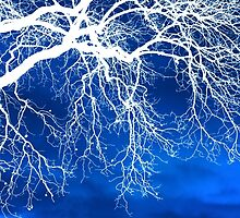 Escaping the Blues Weeping Tree Art by Christina Rollo