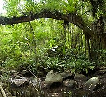 German Road - Pohnpei, Micronesia by Alex Zuccarelli