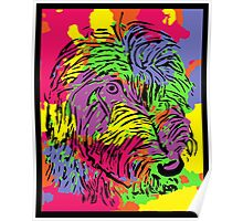 Multicoloured scruffy dog Poster