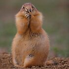 Prairie Dog with Funny Expression by William C. Gladish